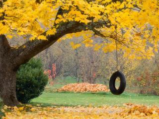 обои Rope Swing,   Hood River,   Oregon фото