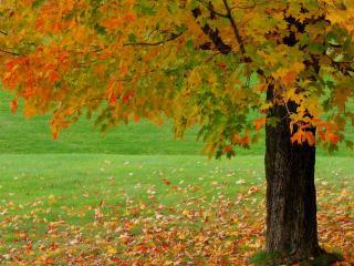 обои Fall Foliage,   Vermont фото