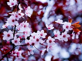 обои Цветущая весна фото