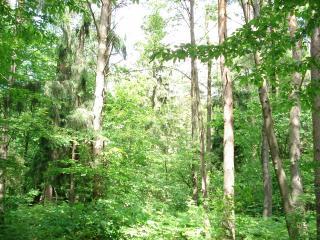 обои Зеленый лес фото