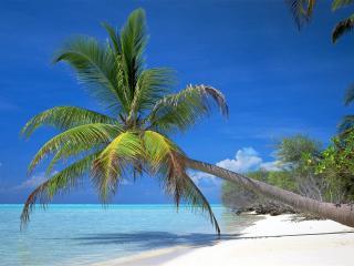 обои Песок и солнце фото