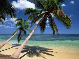 обои Кокосовые пальмы фото