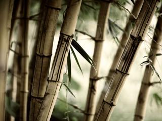обои Красивое фото бамбука крупным планом фото