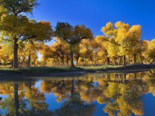 обои Деревья на берегу озера фото