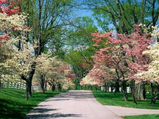 обои Цветущий парк фото