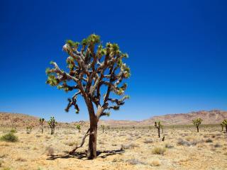 обои Деревья в пустыни фото
