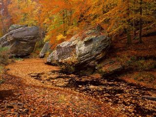 обои Smith Springs Recreation Area,   Shawnee National Forest,   Illinois фото