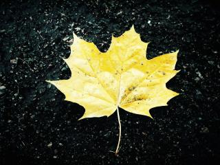 обои Желтый лист на черном асфальте фото