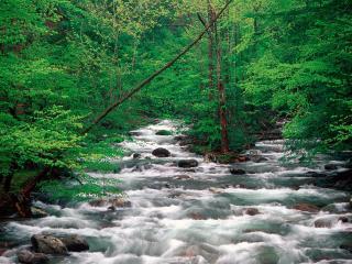 обои Little Pigeon River, Great Smoky Mountains, Tennessee фото