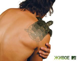 обои Оживленная черепаха фото