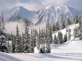 обои Зимнее великолепие фото
