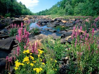 обои Wisconsin River, Ice Age National Scientific Reserve, Wisconsin фото