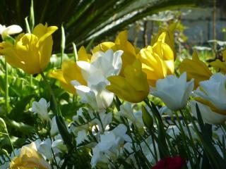 обои Весна пришла фото