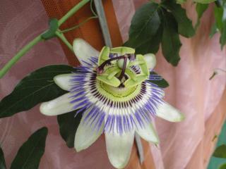 обои Неизвестный красивый цветок фото