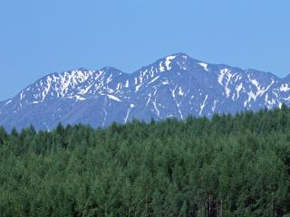 обои Ельник у подножья гор фото