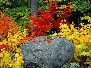 обои Камень в осеннем лесу фото