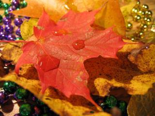 обои Капли на красном кленовом листе фото