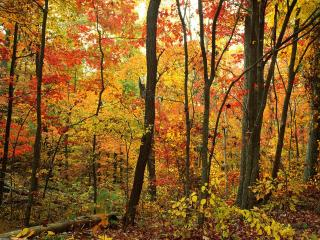 обои Золотая осень в лесу фото