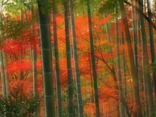 """обои """"Пожар"""" в лесу фото"""