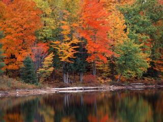 обои Осенняя гамма на берегу речки фото