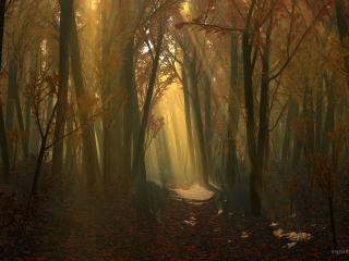 обои Autumnwood dark фото