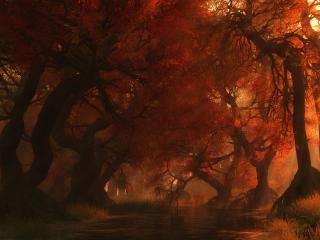 обои Canopycreek autumn фото