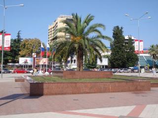 обои Пальма на городской площади фото