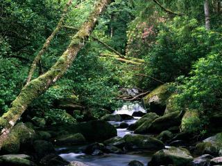 обои The Owengarriff River, Killarney National Park, Ireland фото
