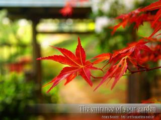 обои Ветка с яркими красными листьями фото
