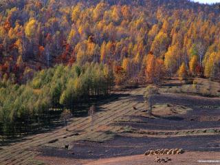 обои Черный конь на лугу у осеннего красочного леса фото