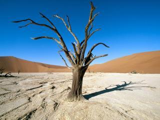 обои Высохшие корявые деревья в пустыне фото