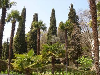 обои Пальмы и кипарисы фото