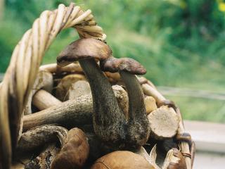 обои Корзина с грибами фото