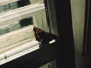 обои Бабочка на окне фото