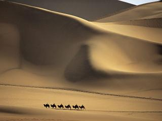 обои Camel Caravan Passes Through the  Sands that Sing,    Taklimakan Desert,   China фото