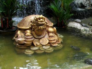 обои Денежная черепаха фото