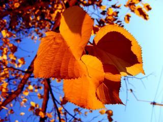 обои Осенние листочки в ясный день фото