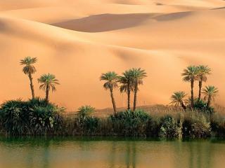 обои Оазис в пустыне фото