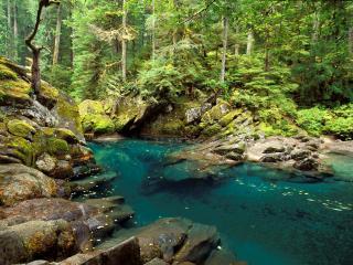 обои для рабочего стола: Ohanapecosh River, Mt. Rainier National Park, Washington