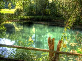 обои для рабочего стола: Чистый летний пруд с зеленой водой