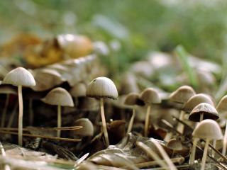 обои Свежие грибы фото