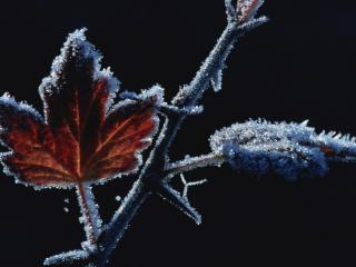обои Замороженный листок фото