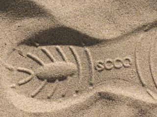 обои След от ботинка на песке фото