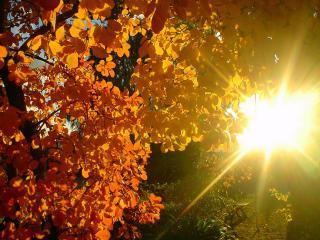 обои Краcивые листья фото
