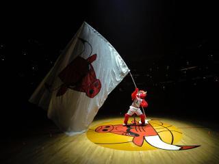 обои Chicago Bulls фото