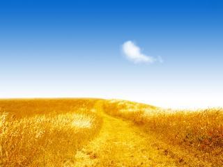 обои Летнее золотое поле фото