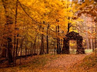 обои Желтые осенние листочки фото