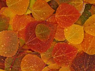обои Осенняя текстура фото