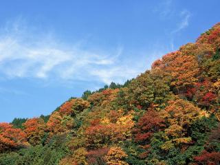 обои Осень на верхушках деревьев фото