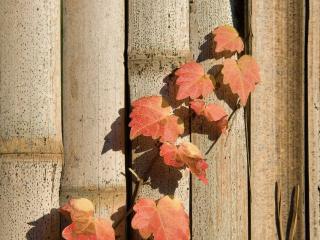 обои Листья и бамбук фото